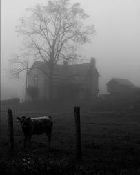 """Early Morning Farm House, 8""""x10"""" digital photograph"""