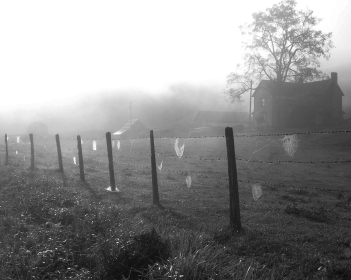 """Web-Dotted Fence, 8""""x10"""" digital photograph"""